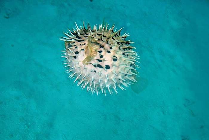 fauna de la bahía de chachacual en huatulco