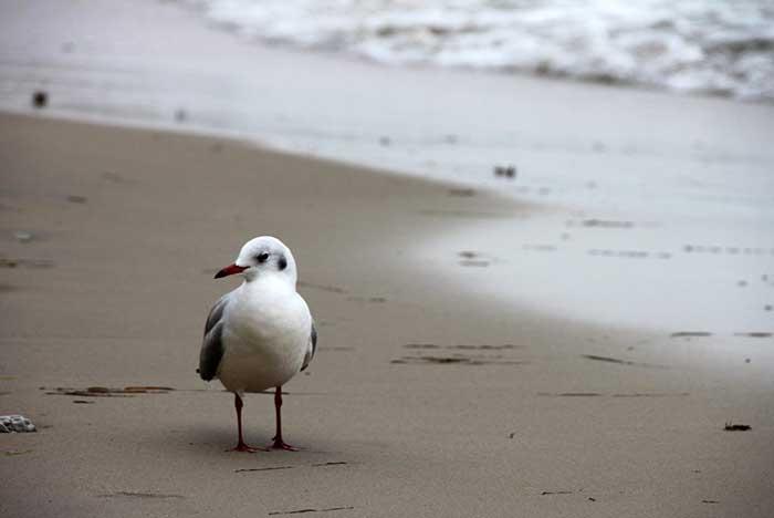 fauna de la bahía de maguey y fauna de la bahía el órgano