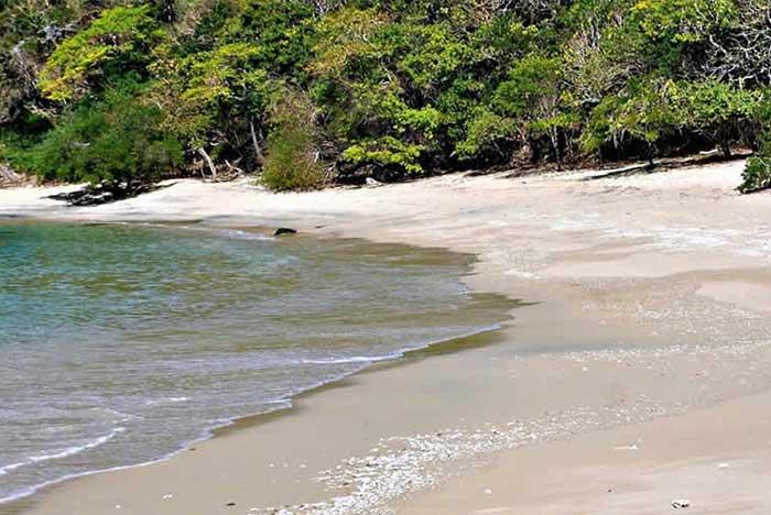 flora de la bahía de chachacual en huatulco