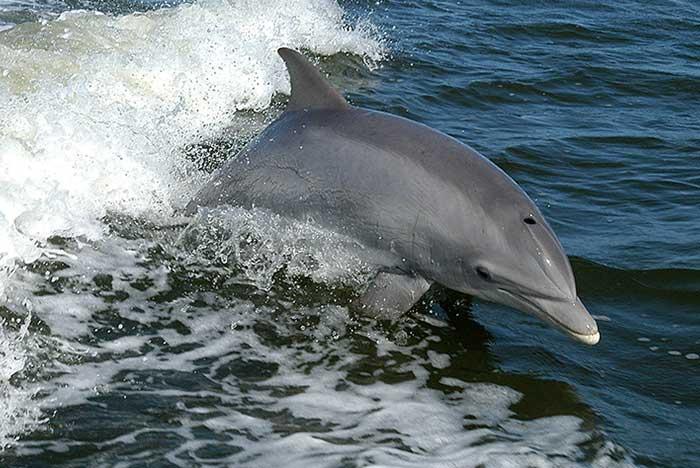 Fauna de la bahía de Santa Cruz huatulco