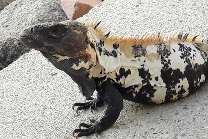 fauna de_la bahía de tangolunda huatulco oaxaca