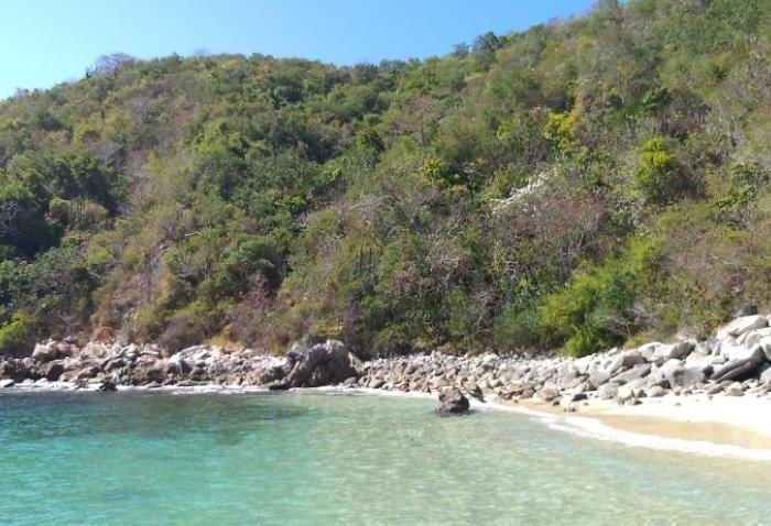 Flora de la Bahía Riscalillo