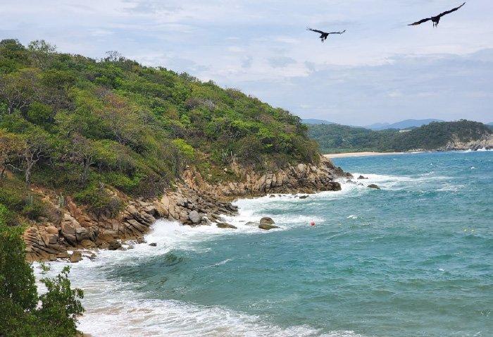 flora y fauna playa tejoncito oaxaca