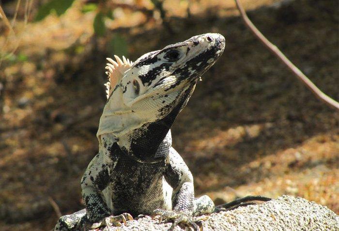 fauna de la bahía San Agustín