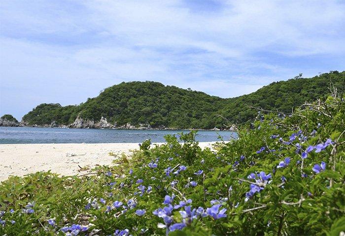 Flora y Fauna de la Playa Riscalillo