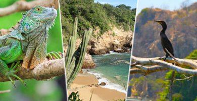flora y fauna de huatulco